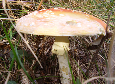Cercatori di Funghi